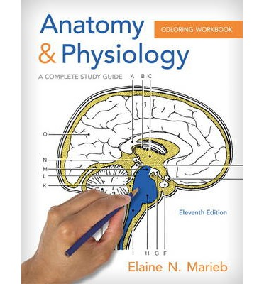 anatomy and physiology coloring workbook page 78 - anatomy and physiology coloring workbook a complete study