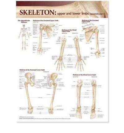 Regional anatomy | Free Ebooks For Free Download Sites