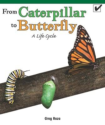from a caterpillar to a butterfly They're probably giant swallowtail butterfly caterpillars, and they're quite spectacular as adults you may want to raise them in jars, feeding them leaves from.