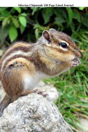 Siberian Chipmunk 100 Page Lined Journal : Blank 100 Page Lined Journal for Your Thoughts, Ideas, and Inspiration