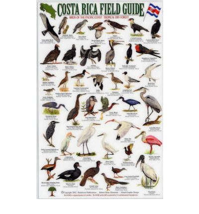 Birds of the Pacific Coast Tropical Rainforest: Osa Peninsula