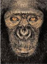 James and Other Apes